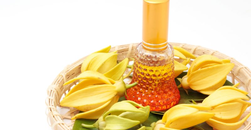 The Complete Guide of Ylang Ylang Essential Oil